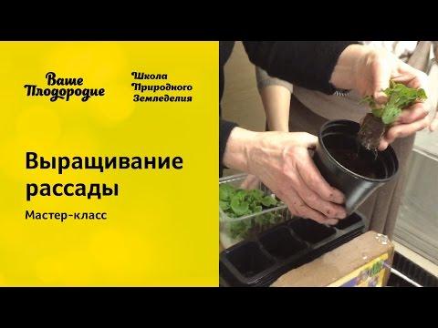 Как выращивать рассаду – когда и как сажать, посев и семена (Часть 2)