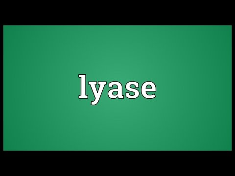 Header of lyase