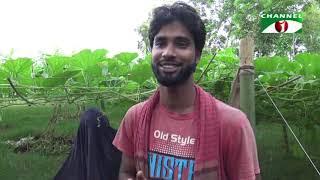 ফরিদপুরে বিদেশী লাউ চাষ    Channel i News