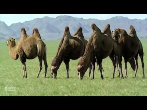 sistemas de reproducción sexual en animales