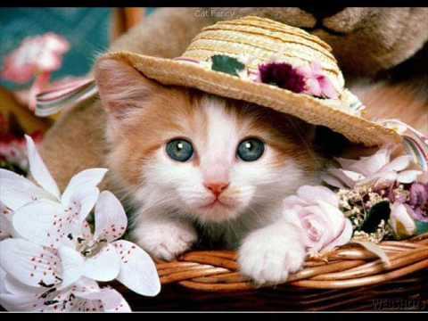 Cantece Pentru Copii-pisicuta,de Neghina Catalina...(la Doar 6 Ani!!! ) video