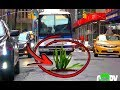 Download Planting Trees In The Streets Of NYC! (Social Experiment) in Mp3, Mp4 and 3GP