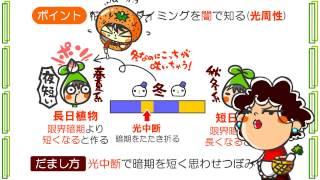 生物4章10話「植物の騙し方」byWEB玉塾