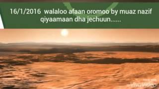 Walaloo afaan oromoo by muaz nazif qiyaamaan