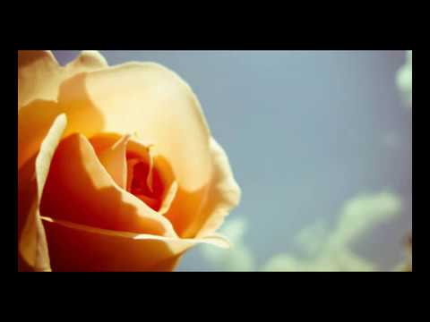 Jehro - Stolen Rose