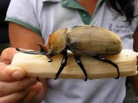 GIANT MONSTER INSECTS
