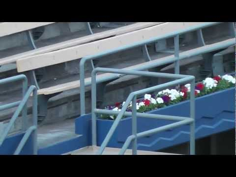 Dodger Stadium Renovations Weds 3-27-13 - Petunias for the Pavilions (and 'Dodgerfilms')