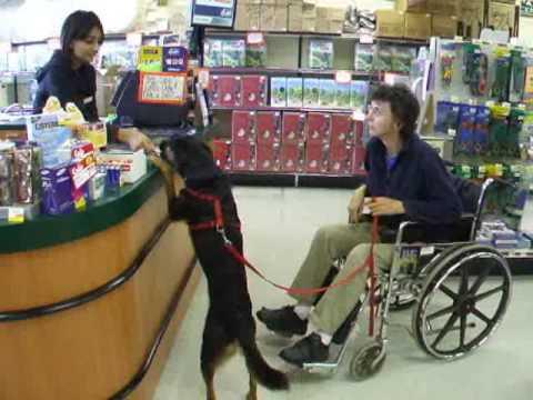Used Dog Wheelchair Uk