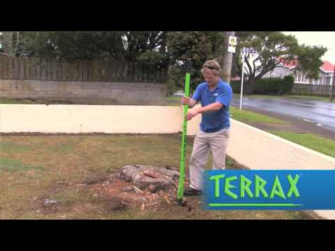 How to clear and remove tree roots