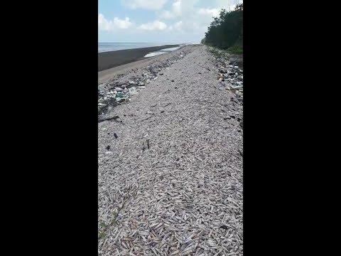 Con đê biển kỳ lạ nhất thế giới ở bờ biển Việt Nam