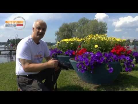 Видео как снимать цветы