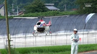 Pesticide spraying RC helicopter. ラジコン 農薬散布 産業用無人ヘリ YANMAR ヤンマー  The small rice field in Japan.