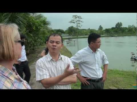 Black Tiger Shrimp Farm Tour In Vietnam   Pond To Processing To Finished Product