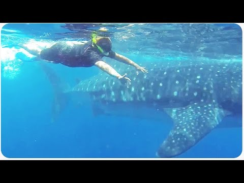 Whale Shark Nearly Eats Diver | #ThrowbackThursday