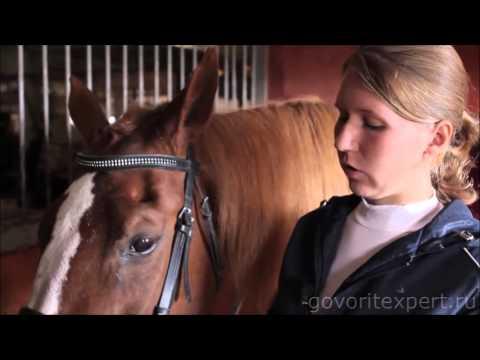 женщина лошадь как завоевывать можете купить