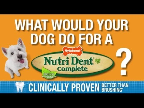 0 What Would Your Dog Do for a Nutri Dent?