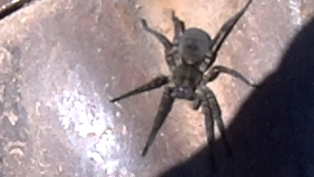 Gardensafari Garden Spiders (with lots of pictures)