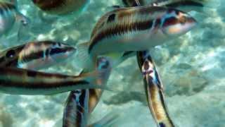 Snorkeling in Ayia Napa, Cyprus 2013-09
