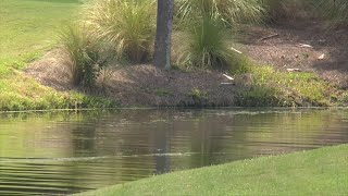 Alligator attacks SC woman as she walks dog