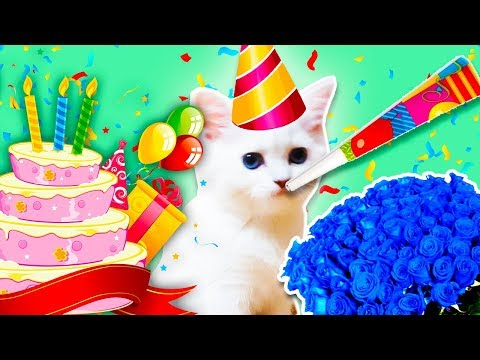 24 ЧАСА !!!ДА!!! КОШКЕ ЭЛЬКЕ Устроили День Нашей Кошки на ее ДЕНЬ РОЖДЕНИЕ Заказали ТОРТ для КОШКИ!!