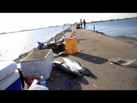 Tommy Fishing Show KingFish at Freeport 2015 Full HD Part 4