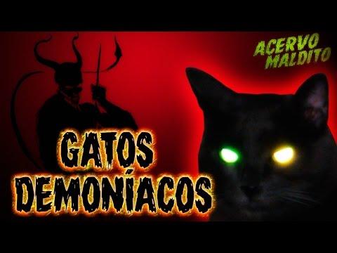 Gatos demoníacos - Lenda Urbana