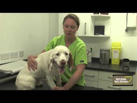 0 Basic dog health check