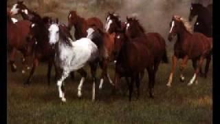 Watch Chantal Kreviazuk Wild Horses video