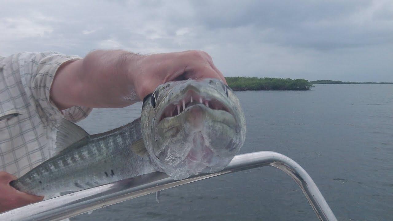 Fishing in cuba for barracuda cayo guillermo youtube for Fishing in cuba
