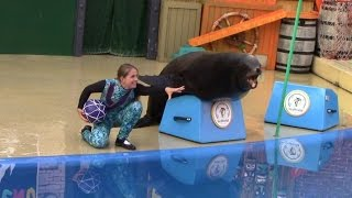 Sea Lions Tonite 2015 (Full Show) at SeaWorld San Diego (6/16/15)