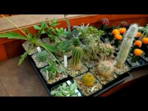 How To Care For Cacti &amp  Succulents