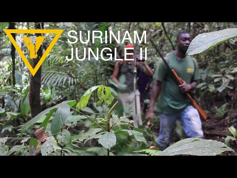 Jungle trekking in Suriname. Along the Gran Rio close to Maupe Dam and Stonpoortoe. Eating and hunting for Agouti and Black currasow ( Boshaas en Boskip ). Hiking through dense rainforest....