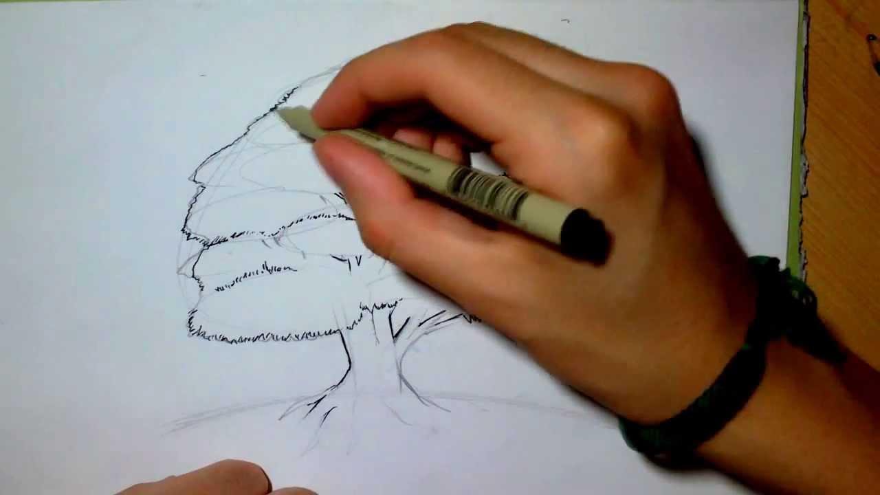 Dessiner un arbre cr puscule observation youtube - Arbre dessiner ...