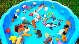 Lot of Wild Animals Sea Animals Learn Colors for Kids with Real Safari Videos