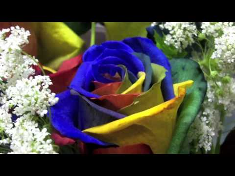 Where to buy rainbow roses at thedoglogs for Where to buy rainbow roses