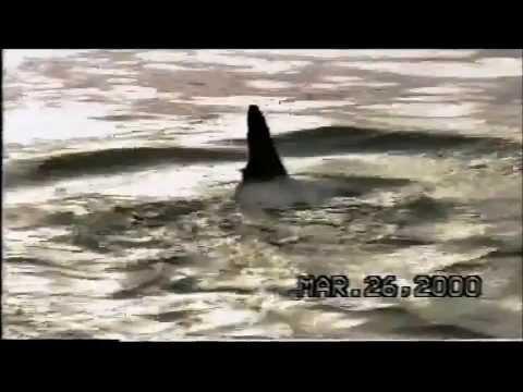 Santee cooper lake fishing videos for Lake marion fishing report