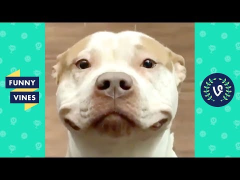 TRY NOT TO LAUGH - Cute Funny Animals of the Week!