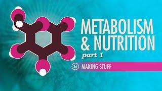 Download Lagu Metabolism & Nutrition, part 1: Crash Course A&P #36 Gratis STAFABAND