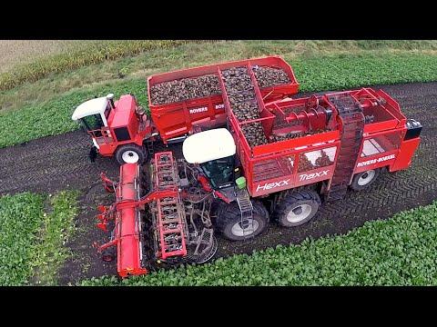 12 row Sugarbeet harvesting | Rovers Boekel l Holmer / Agrifac Hexx Traxx 12 | Gilles overlaadwagen