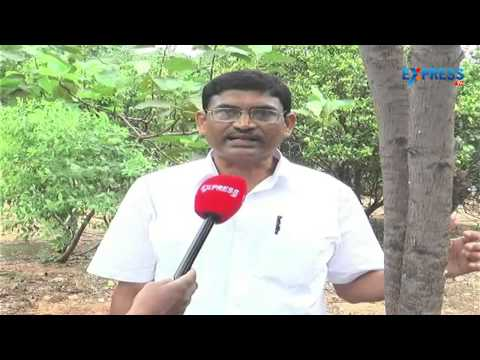 Red Sandalwood Cultivation In Nalgonda District video