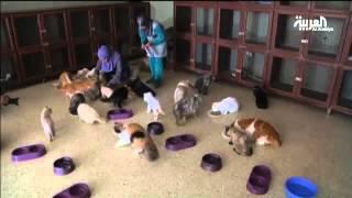 أردنية تأوي 224 قطة في منزلها
