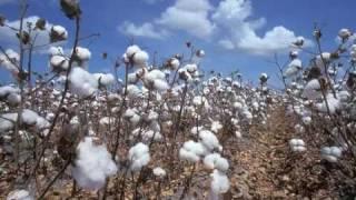 Watch Bill Monroe Cotton Fields video