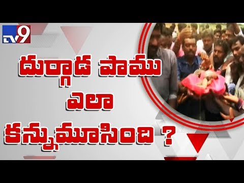 Durgada snake mystery still continues - TV9