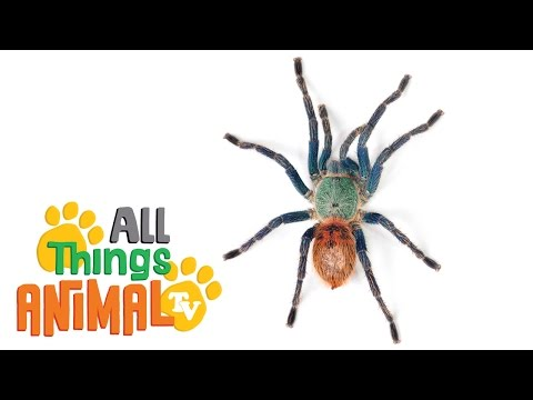 SPIDERS: Animal videos for children and kids. Preschool | Kindergarten learning.
