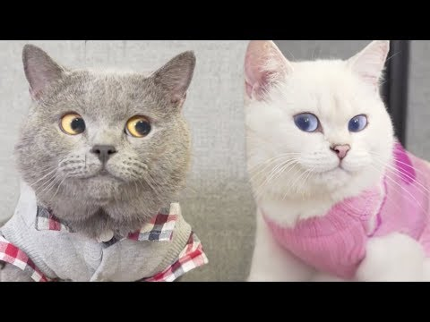 [NEW] Aaron's Animals Funny Videos Compilation 2018