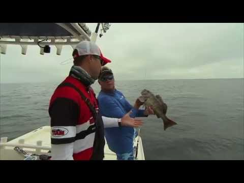 Catching HOGFISH with hook and line in Tampa Bay
