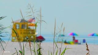 Things to do in Sarasota, Florida