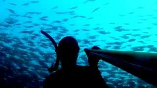 Binlerce Balığın Arasında Kalmak - Diving with Thousands of Fish