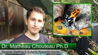 Dartfrog Hybrid Research; Frog & Butterfly Mimicry