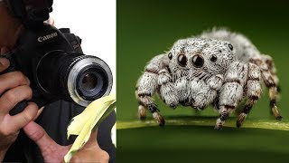 Use Any Lens for Macro Photography